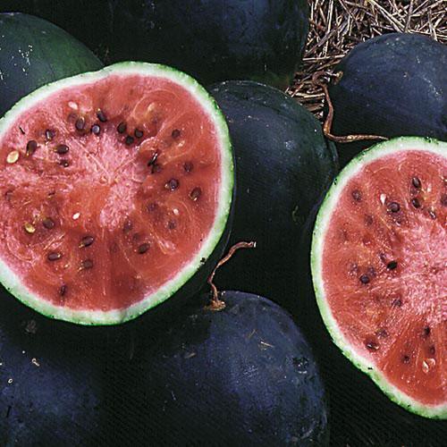 fruit délice saint calais