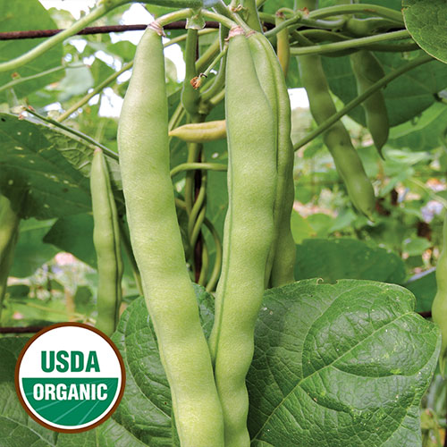 0108 brinker carrier bean organic