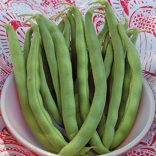 Bean Seeds Heirloom And Organic Seed Savers Exchange
