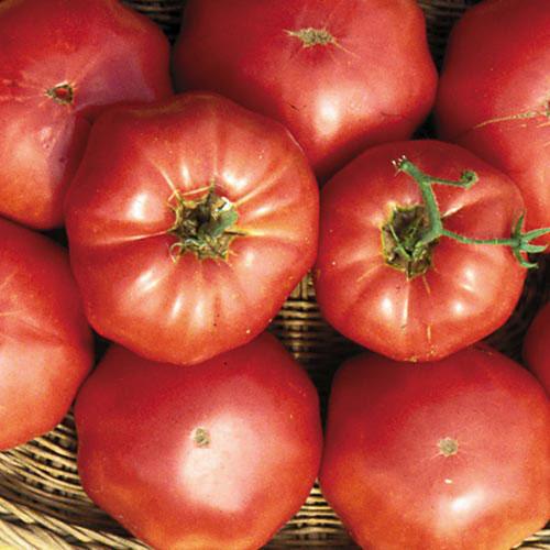 Heirloom Tomato Seeds Seed Savers Exchange