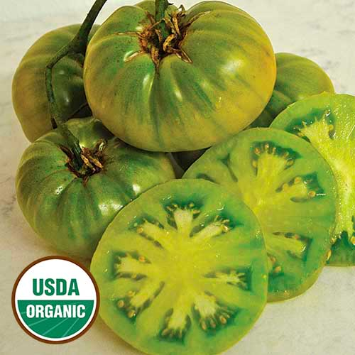 Tomato, Tasty Evergreen
