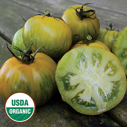 green zebra organic tomato seed savers exchange. Black Bedroom Furniture Sets. Home Design Ideas