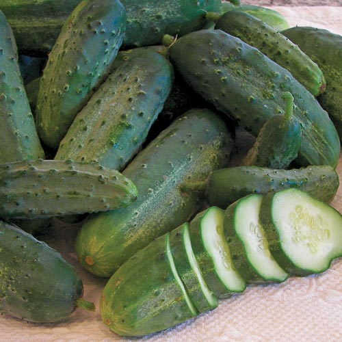 Cucumber, Snow's Fancy Pickling