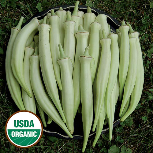 Silver Queen Organic Okra Seed Savers Exchange