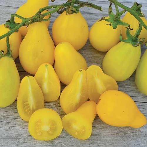 Beam's Yellow Pear Tomato - Seed Savers Exchange