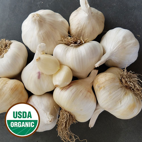 Garlic, Inchelium Red