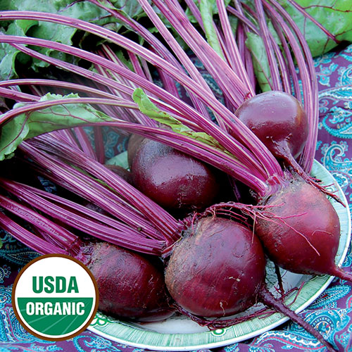 Beet, Detroit Dark Red