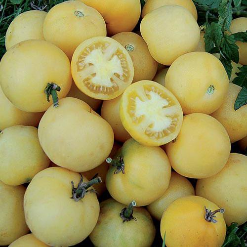 Wapsipinicon Tomato Seed Savers Exchange