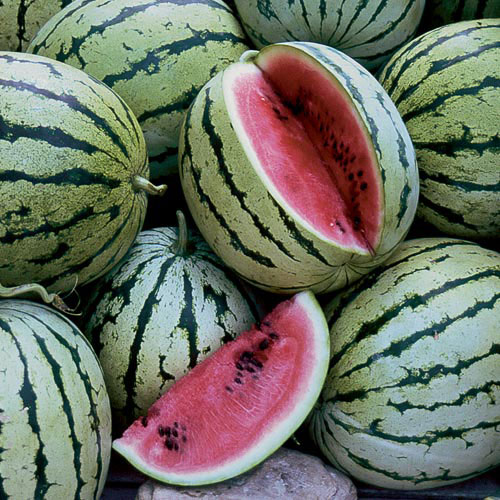 Watermelon, Chris Cross