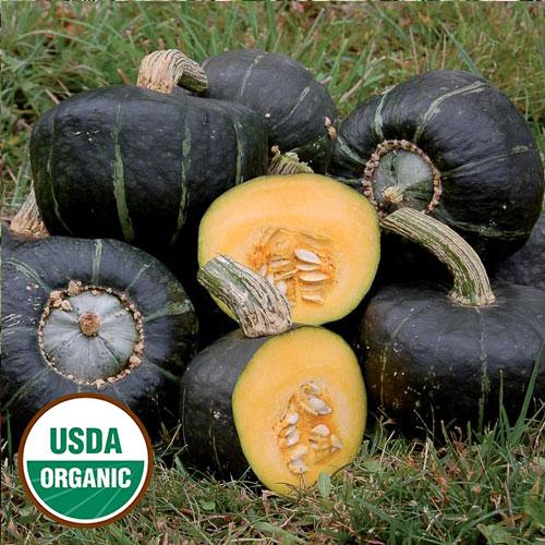 Burgess Buttercup Organic Squash - Seed Savers Exchange