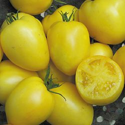 Tomato, Powers Heirloom