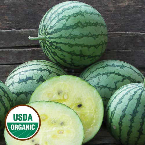 Petite Yellow Organic Watermelon - Seed Savers Exchange