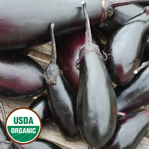 Eggplant, Purple Pickling