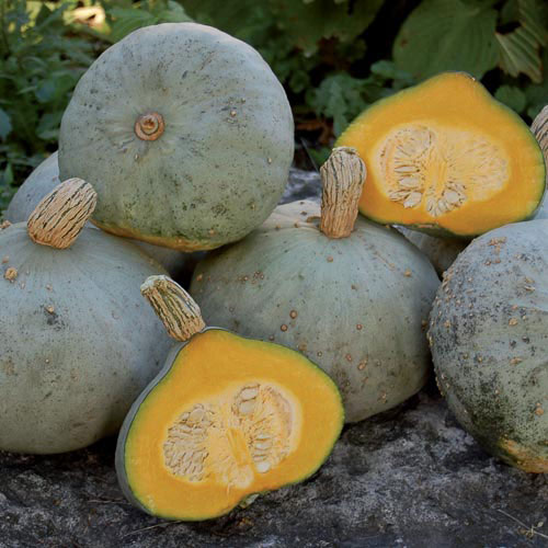 Squash, Silver Bell