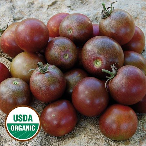 black cherry organic tomato seed savers exchange. Black Bedroom Furniture Sets. Home Design Ideas