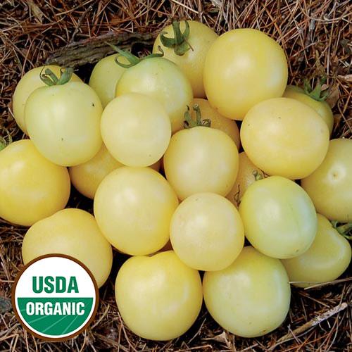 White Cherry Organic Tomato - Seed Savers Exchange