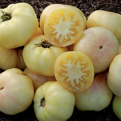 White Tomesol Tomato - Seed Savers Exchange