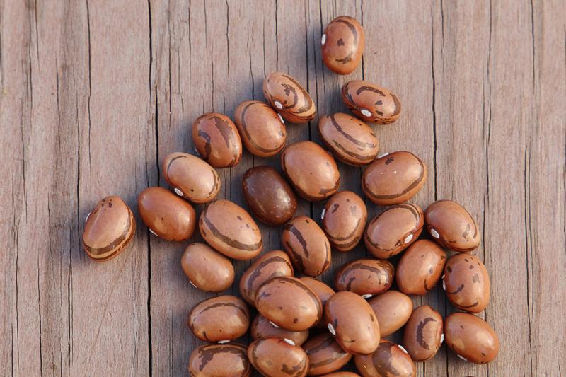 Valena Italian pole bean