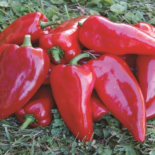 Chervena Chushka Pepper