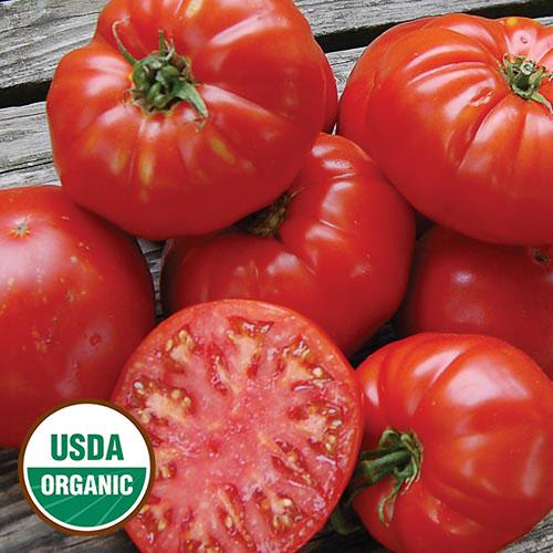 Tomato, Kanner Hoell