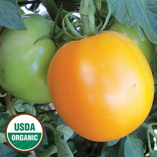 Tomato, David Davidson's