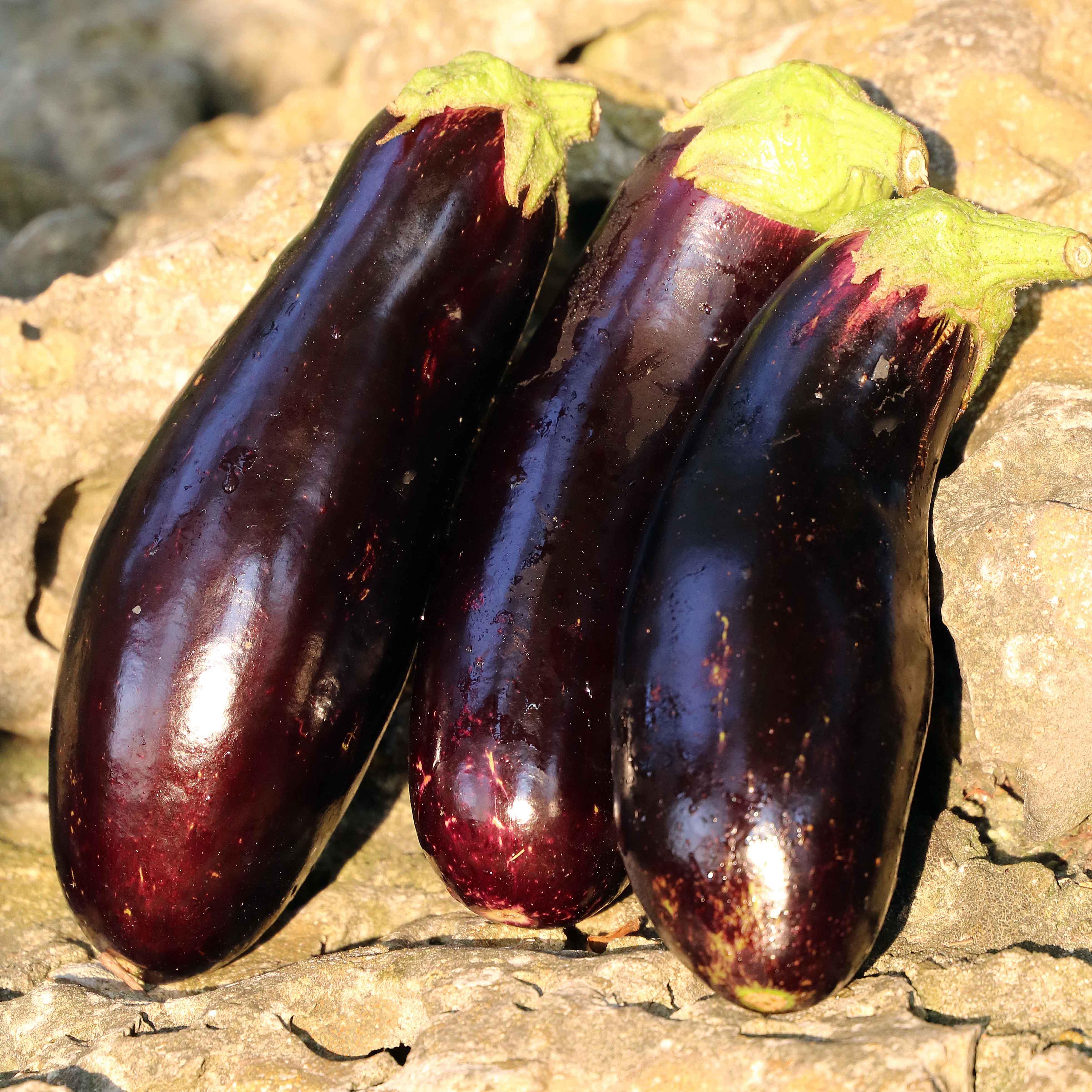 Eggplant, Diamond
