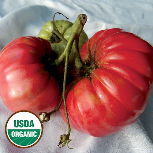 Tomato, Soldacki