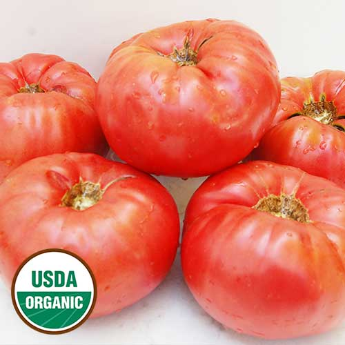Whittemore Heirloom Tomato