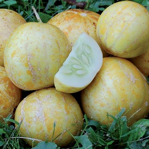 Cucumber, True Lemon