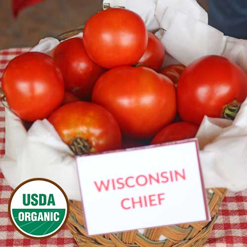 Wisconsin Chief Tomato