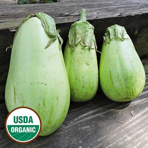 Louisiana Green Oval Eggplant