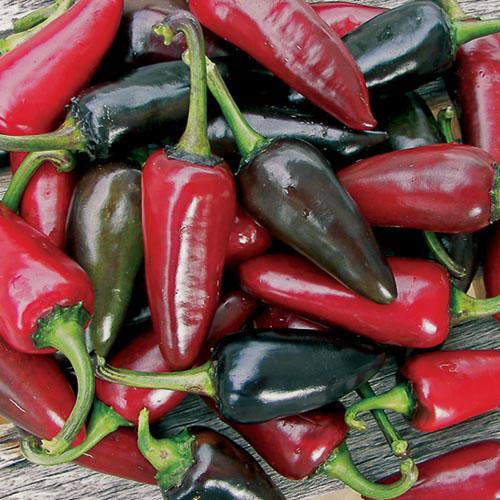 Pepper, Black Hungarian