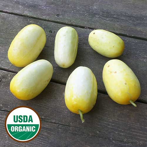 North Carolina Heirloom Cucumber