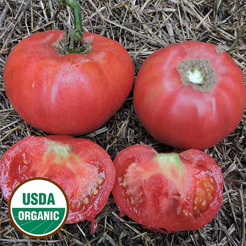 Brimmer Pink Tomato