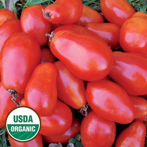 Tomato, Martino's Roma