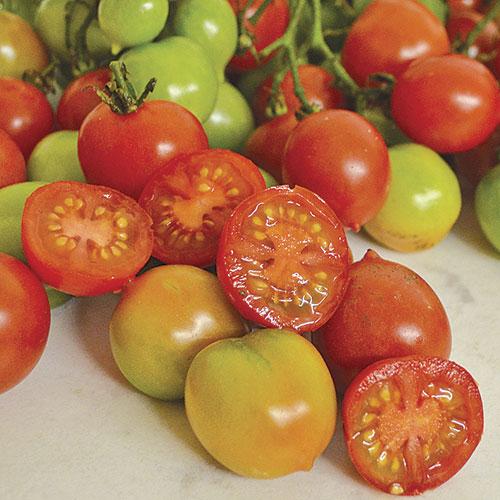 Riensentraube Tomato