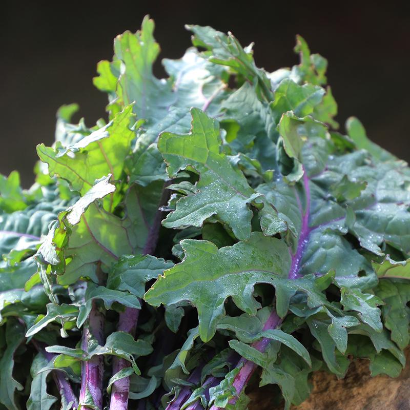 Greenpeace Kale