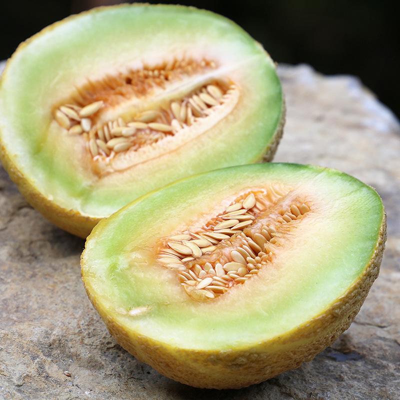 Fordhook Gem Melon