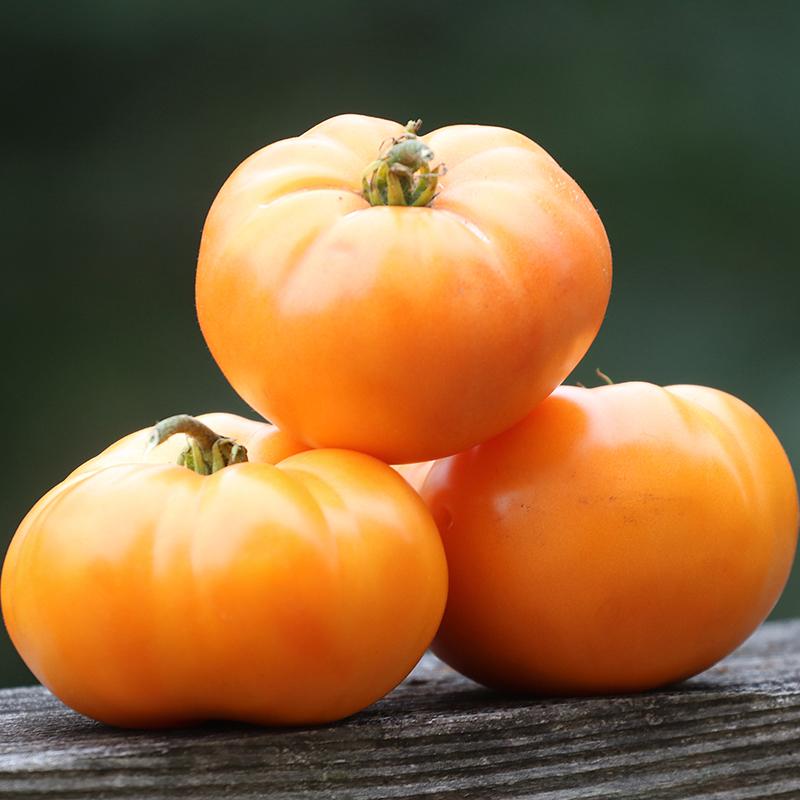 Oma's Orange Tomato