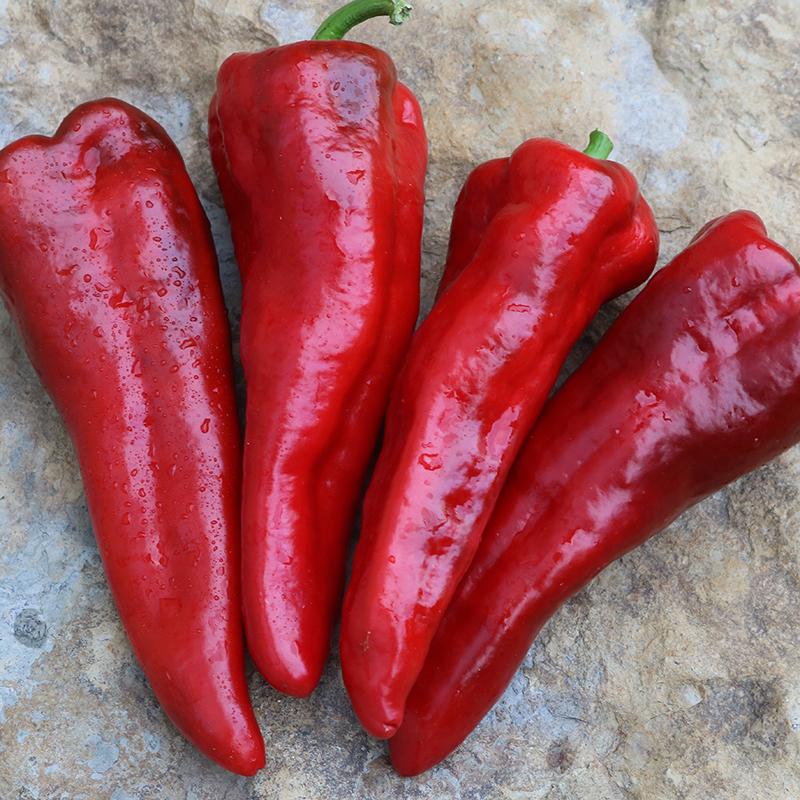 Italia Pepper