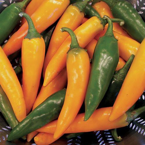 Pepper, Bulgarian Carrot