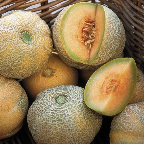 Melon, Minnesota Midget
