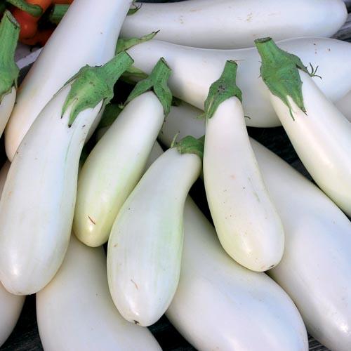 Eggplant, Casper