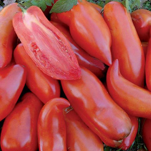 Tomato, Federle