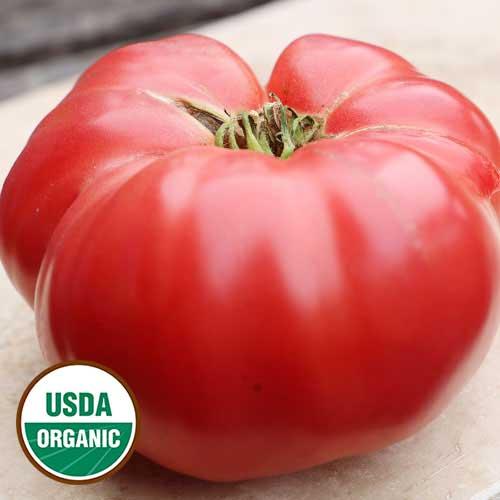 German Pink Tomato