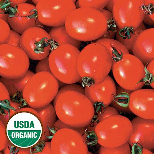 Tomato, Principe Borghese