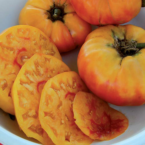 Tomato, Gold Medal