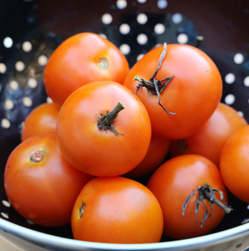 Tomato, Jaune Flamme