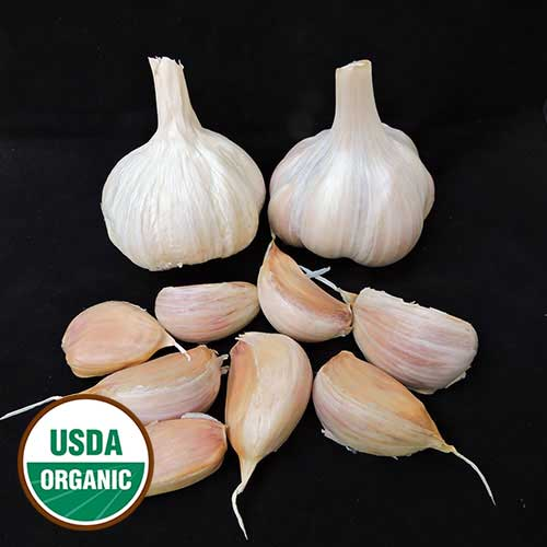 Conti Family Heirloom Garlic
