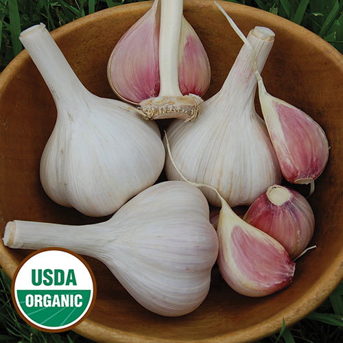 All Garlic Varieties